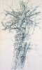 Newton, Kenneth (1933-1984): Acacia Tree, Hopebourne 1975, signed, pencil on paper, 84 x 49.5 cms. The Richard Harris Gift.
