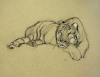 Williams, Marjorie (nee Murray 1880-1961): Zoo, sketchbook, 30.5 x 24 cms. Presented by Mariella Fischer Williams MD in 2003.