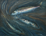 Whicker, Fred (1901-1966): Mackerel, signed, oil on board, 42 x 51 cms. Presented by Alan and Christine Smith in 2006.