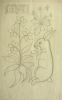 Williams, Marjorie (nee Murray 1880-1961): Design from La Dame a La Leoine, Cluny 16th century, inscribed for Joanne, pencil on paper, 48.5 x 49.5 cms. Presented by Dr Mariella Fischer-Williams.