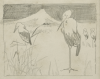 Williams, Marjorie (nee Murray 1880-1961): Storks - farm scenes on reverse, pencil on paper, 21 x 18 cms. Presented by Dr Mariella Fischer-Williams.
