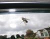 Fly on a windscreen, photograph, 21.4 x 30 cms. Presented by the artist as part of the Heritage Lottery Fund's Darwin 200 celebrations.