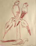Thomas, Martina (1924-1995): Study for 'Parrots at Birdworld', signed, ink on paper, 35 x 28.5 cms. Presented by Eric James Mellon NDD Hon Fellow CPA.