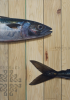 Ruiz, Miguel: Mackerel, signed and dated 2005, oil on canvas, 70 x 50 cms. Purchased with funding from the Heritage Lottery Fund as part of the Darwin 200 celebrations.