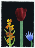 Johnson, Nerys Ann (1942-2001): Maroon tulip with apricot hyacinth and blue clematis, 28 May 2001, gouache, 20 x 15 cms. Purchased from the Nerys Johnson Trust.